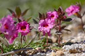 make the most of your desert wildflower experience things to do