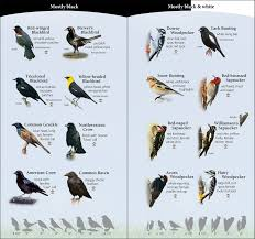 birds of the northwest adventurepublications net