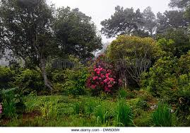 botanical gardens fort bragg ca festival of lights botanical gardens fort bragg talentneeds com