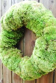Moss Vase Filler 93 Best Woods And Winter Moss U0026 Ferns U0026cones Oh My Images On