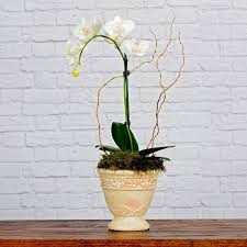 florist baton blooming orchid in baton la flower therapy florist