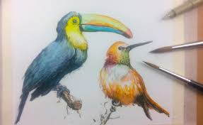 how to draw u0026 paint birds with ink and watercolor part 1 youtube