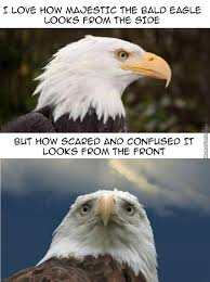 America Eagle Meme - bald eagle by recyclebin meme center