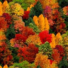 cotton fabric nature fabric landscape medley fall colored