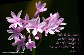 light in the darkness verse bible verse john 1 5 our daily blossom