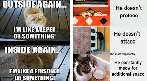 Caturday Meme - i can has cheezburger caturday funny animals online cheezburger