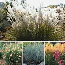 ornamental grass garden