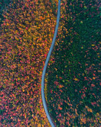 the way the road separates the color of the trees woahdude
