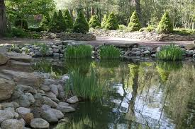 Types Of Fish For Garden Ponds - 37 backyard pond ideas u0026 designs pictures