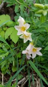 washington state native plants 494 best native and local plants u0026 trees images on pinterest