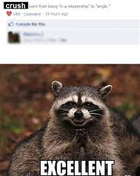 Raccoon Excellent Meme - excellent humour raccoons and animal