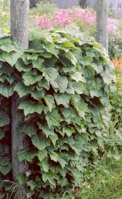 woody plants and vines