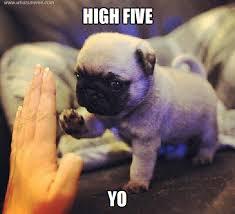 High Five Meme - high five what s meme funny pinterest meme animal and dog