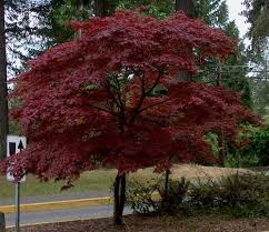 outdoor plants top 5 trees for small garden www coolgarden me
