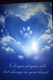 loss of dog 7 quotes that ll help you cope with losing your pet dog