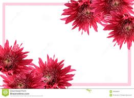 blooming flower frame stock images image 18300824