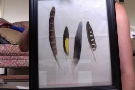 www feather feather identification birds in backyards