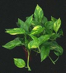 clean the air with house plants greenstrides sustainable