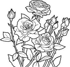 rose flower coloring printable flowers rose coloring
