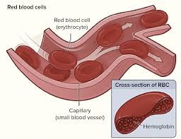 Anatomy And Physiology Coloring Workbook Cells And Tissues Answers Components Of Blood Article Khan Academy
