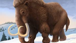 woolly mammoth die national geographic