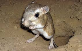 California wild animals images Drought threatens california wildlife al jazeera america jpg