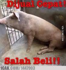 Meme Babi - memes babi kurban memes pics 2018
