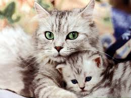 free cat with a kitten wallpaper wallpaper download animals town