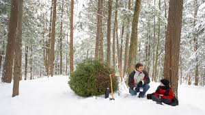 where to cut your own christmas tree in northern utah 2015