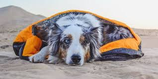 australian shepherd b c backpacking with dogs top 10 essentials camping with dogs
