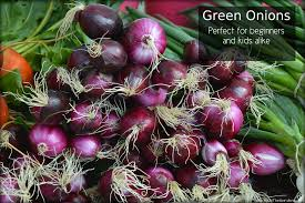 Gardening For Beginners Vegetables by Green Onions Perfect For Beginners And Kids Alike See You In