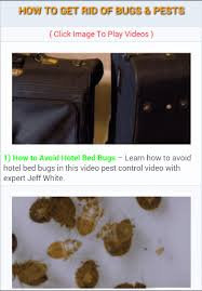 Bed Bugs Smell Pest Control Bed Bugs Stink Bugs Pantry Pests Termites