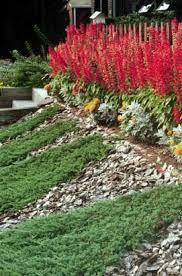 Salvia Flower Red Salvia