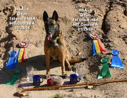 contes d hoffmann belgian malinois my accomplishments dantero malinois