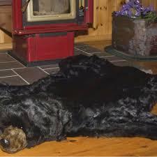 27 best bear rug for bear sleeping bag images on pinterest bear