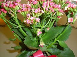 Plants Blooming Flowering House Plants Identification Darxxidecom
