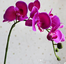 display flower moth orchid flower butterfly orchid artificial