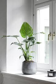home decor ideas with plants fotonakal co