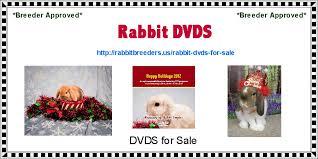 rabbit dvds rabbit dvds rabbit dvds for sale