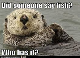Sea Otter Meme - animal capshunz sea otters funny animal pictures with captions