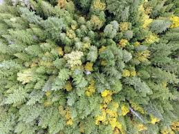 springs in the forest matt reichel