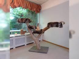 design katzenbaum holz kratzbäume natur kratzbaum asten kratzbaum