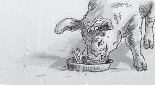 simple cinnamon helps pig avoid heat and hyperventilation u2013 a new