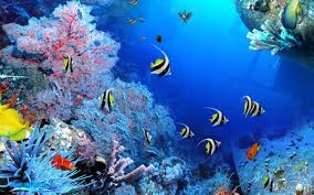 fish tank 3d live wallpaper free download wallppapers gallery