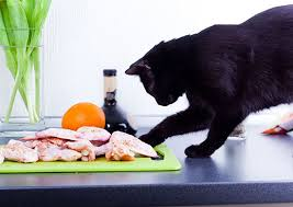 raw diets and cats what about easting bones feline nutrition
