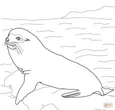 galapagos fur seal coloring page free printable coloring pages