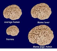 Meme Lover - average human normie meme lover meme page admin meme on me me