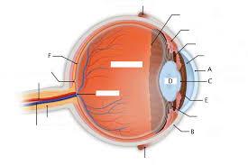 Human Ear Anatomy Quiz Medical Use Human Organ Anatomy Human Eye Anatomy Diagram Www