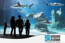 vasche acquario acquario di genova attrazioni per bambini per famiglie delfini