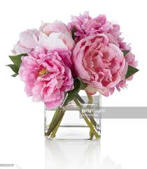 The Pink Peonies by Pink Peonies On White Background Stock Photo Getty Images